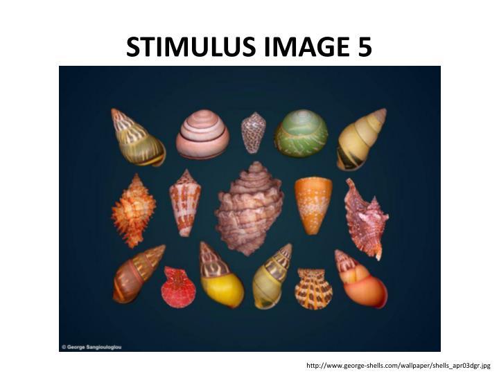 STIMULUS IMAGE 5