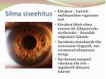 silma siseehitus
