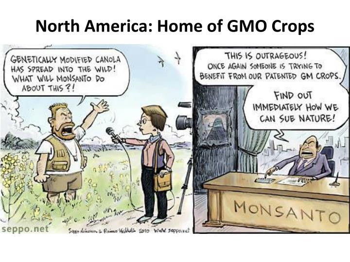 North America: Home of GMO Crops