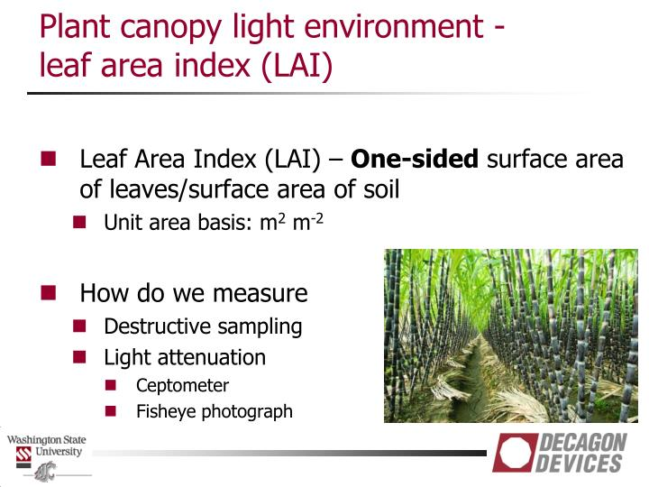 Plant canopy light environment -