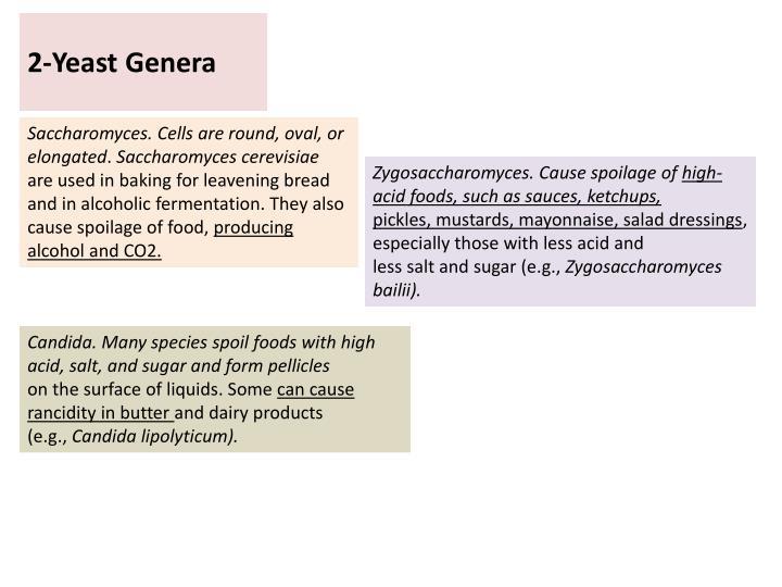 2-Yeast Genera