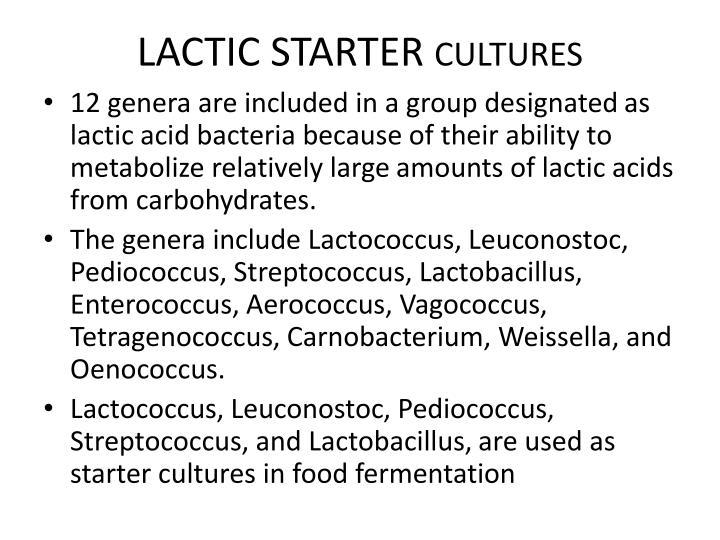 LACTIC STARTER