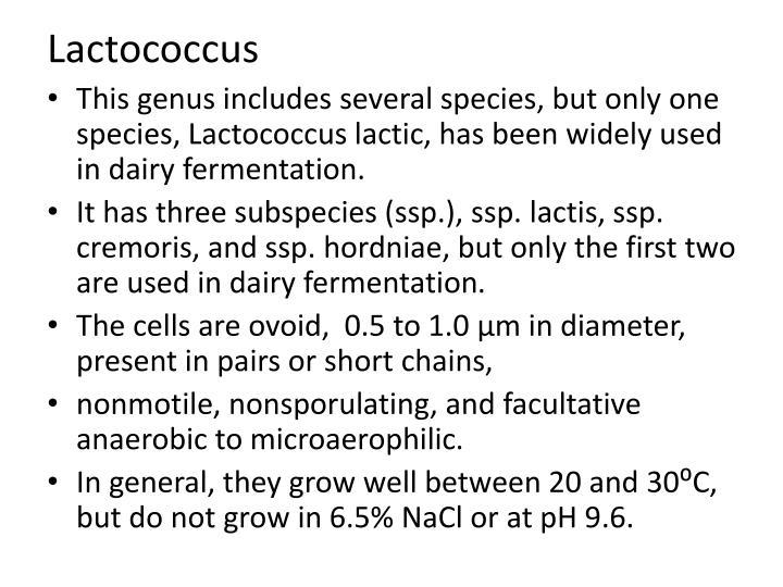 Lactococcus