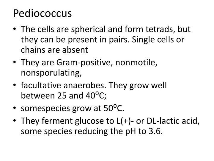 Pediococcus