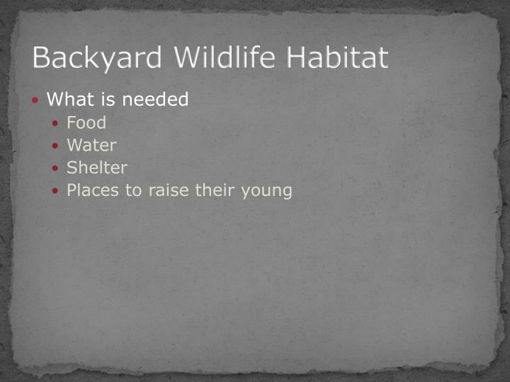 Backyard wildlife habitat1