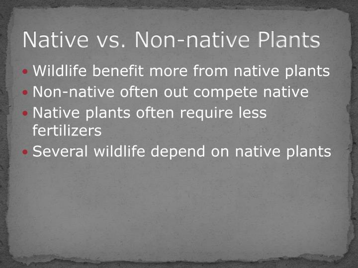 Native vs. Non-native Plants