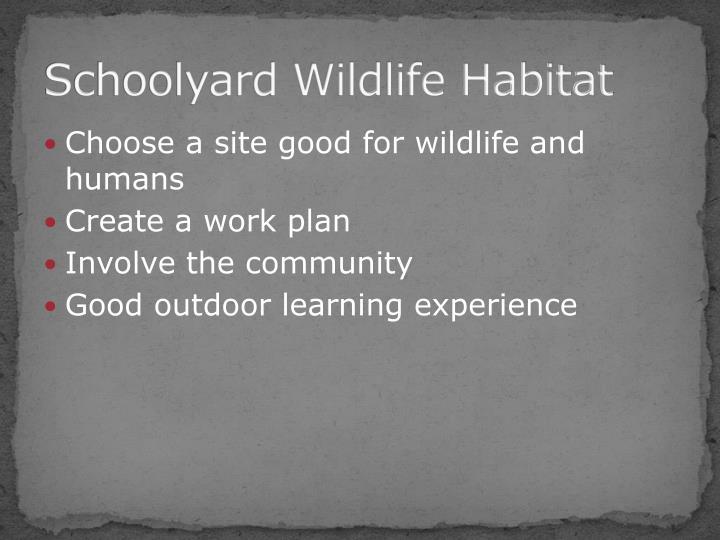 Schoolyard Wildlife Habitat