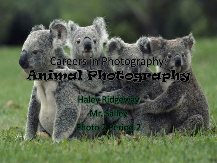 Careers in photography animal photography