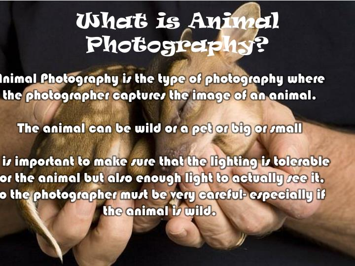 What is animal photography