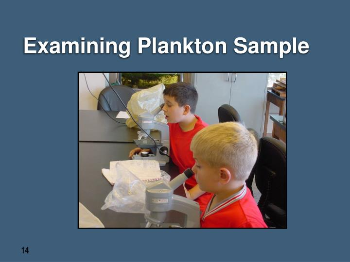 Examining Plankton Sample