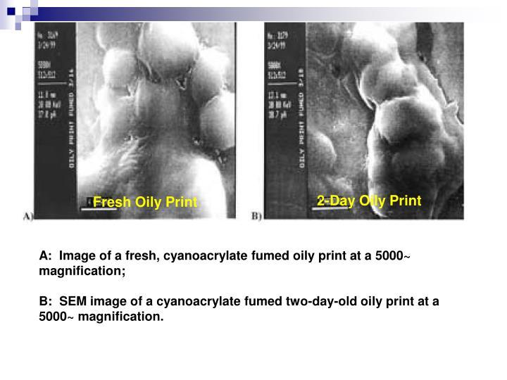 2-Day Oily Print