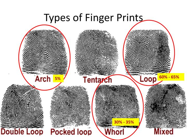 Types of Finger Prints