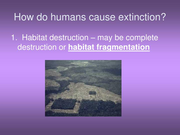 How do humans cause extinction?