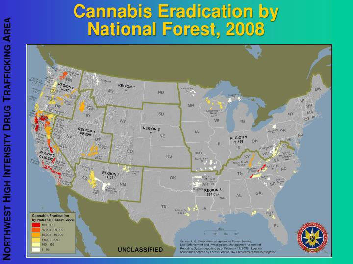 Cannabis Eradication by