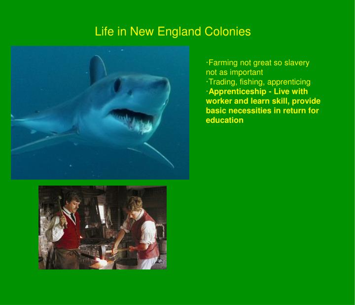 Life in New England Colonies