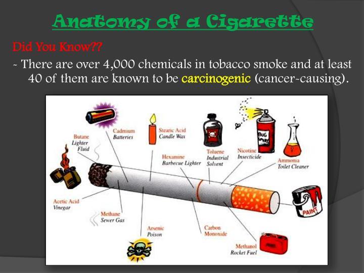 Anatomy of a Cigarette