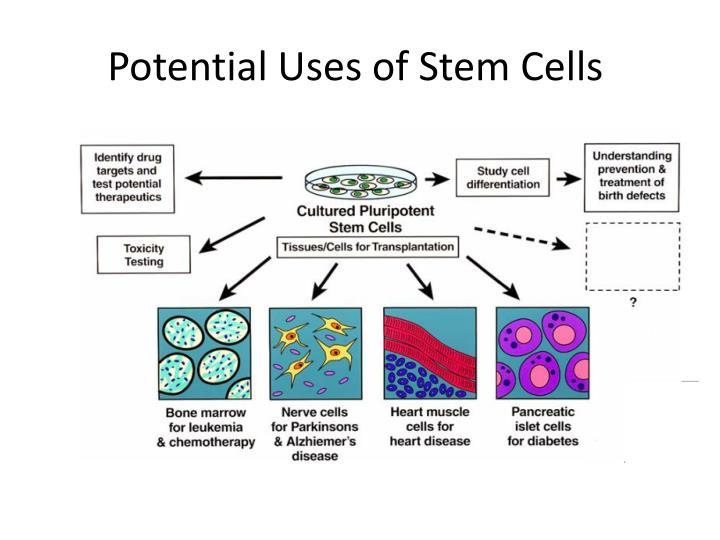 basics of stem cell research Stem cell: basics, classification and applications  of potential stem cell-based therapies has expanded in recent years due to advances in stem cell research.