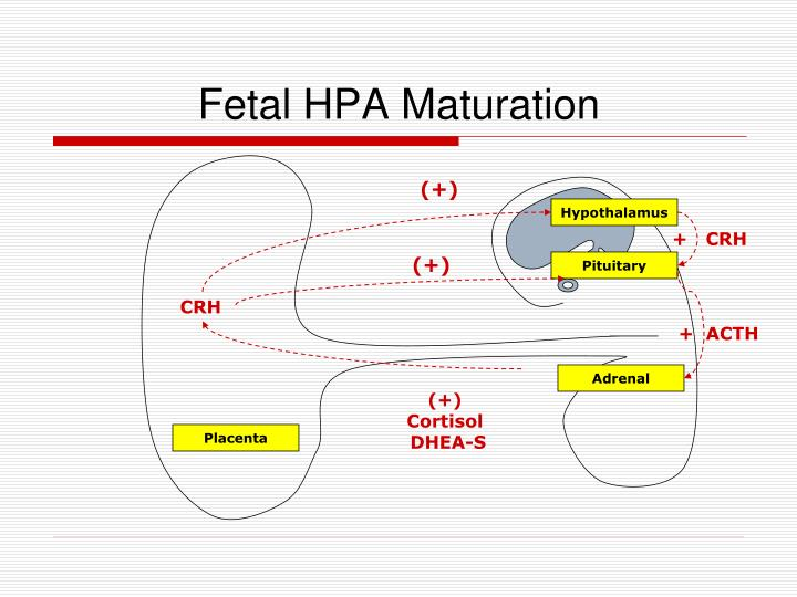 Fetal HPA Maturation
