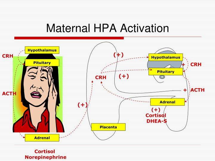 Maternal HPA Activation