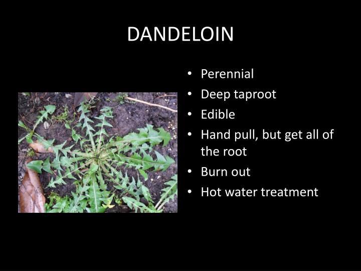 DANDELOIN