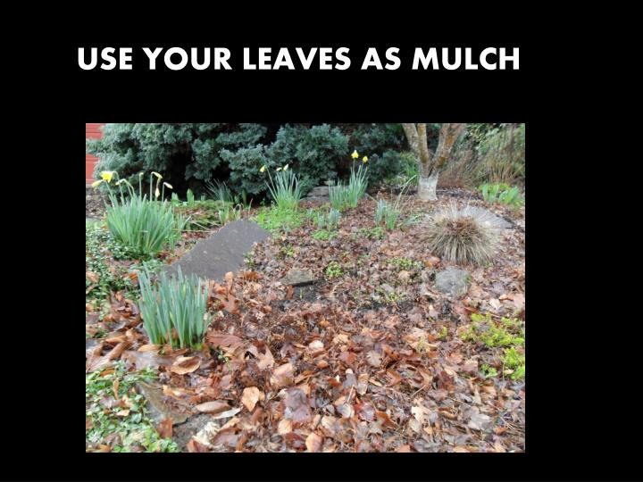 USE YOUR LEAVES AS MULCH