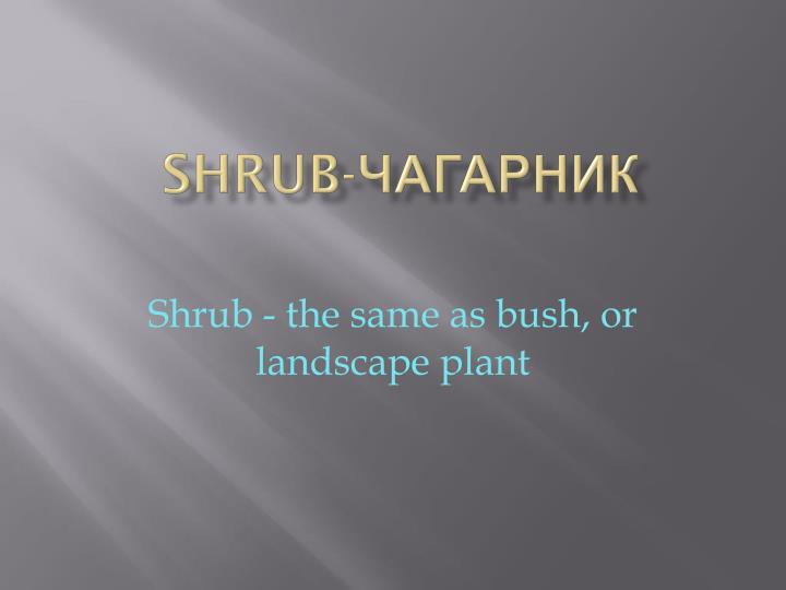 Shrub-
