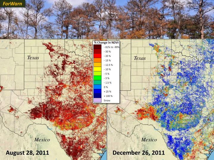 Drought takes a toll on Texas trees