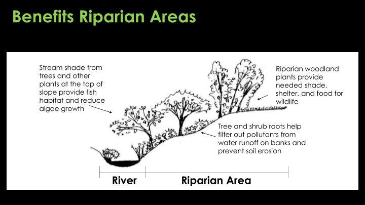 Benefits Riparian Areas