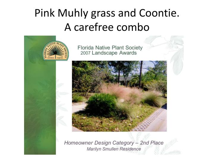Pink muhly grass and coontie a carefree combo