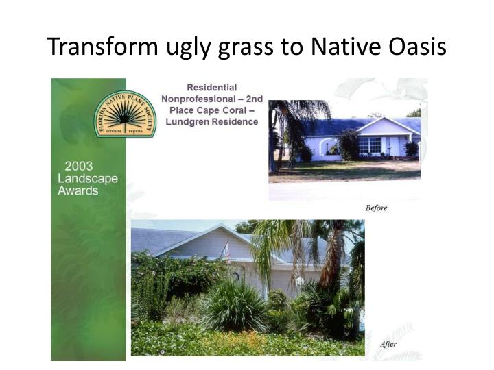 Transform ugly grass to Native Oasis