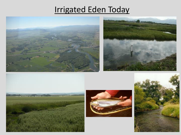 Irrigated Eden Today