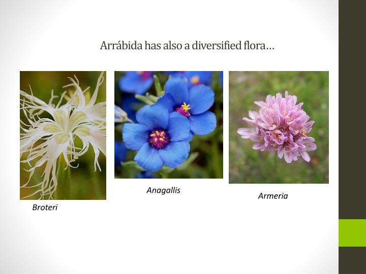 Arr bida has also a diversified flora