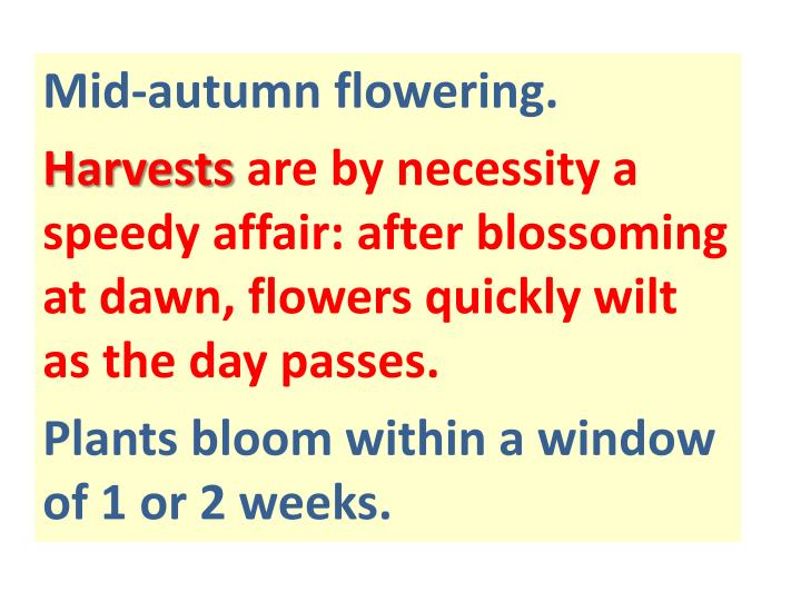 Mid-autumn flowering.