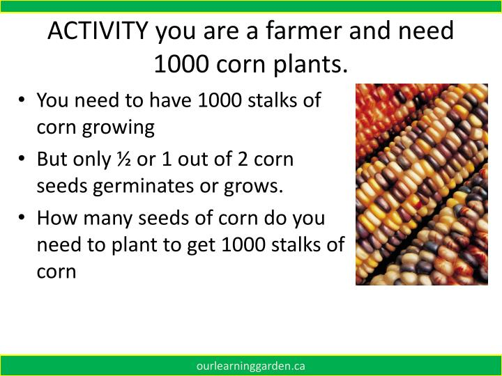 ACTIVITY you are a farmer and need 1000 corn plants.