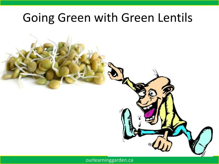 Going Green with Green Lentils