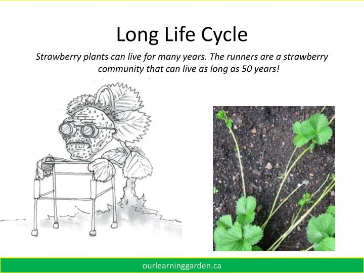 Long Life Cycle