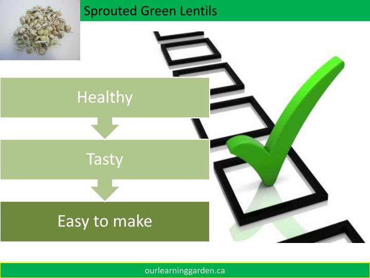 Sprouted Green Lentils