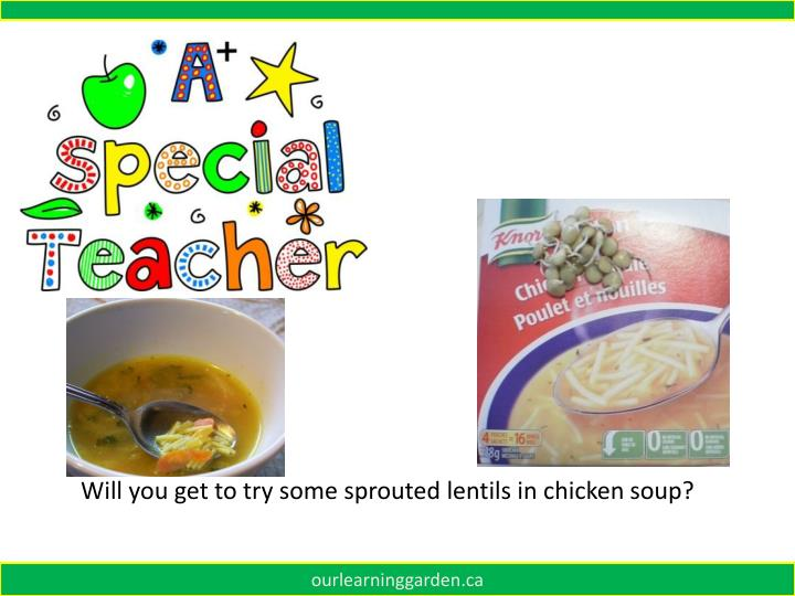 Will you get to try some sprouted lentils in chicken soup?