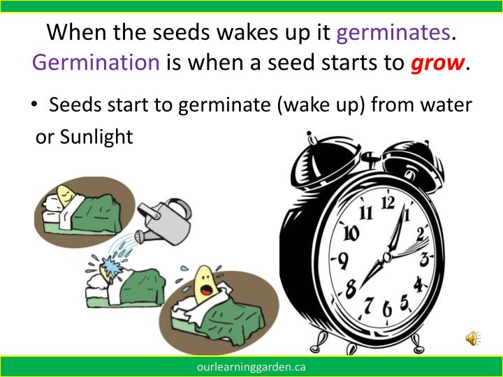 When the seeds wakes up it