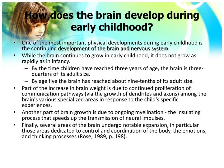 How does the brain develop during early childhood?