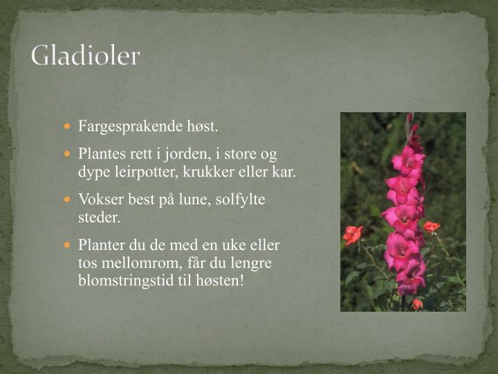 Gladioler