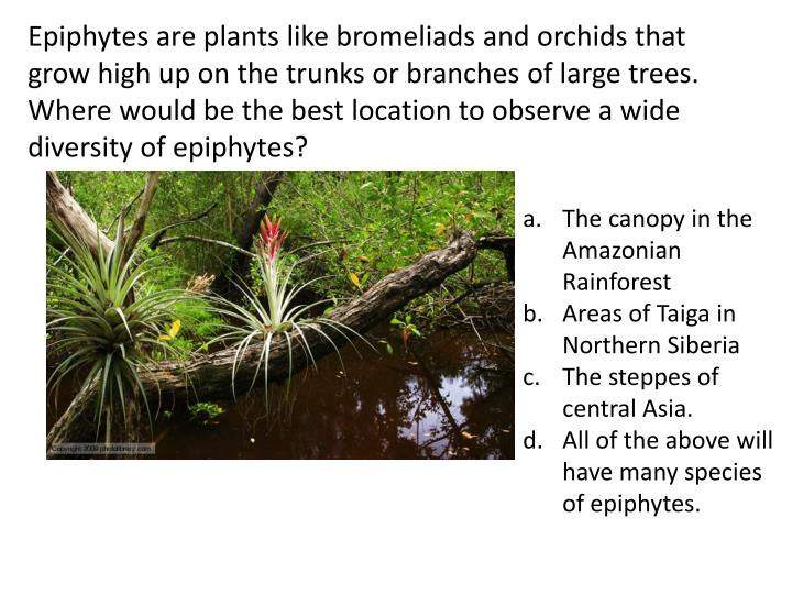 Epiphytes are plants like bromeliads and orchids that grow high up on the trunks or branches of large trees. Where would be the best location to observe a wide diversity of epiphytes?