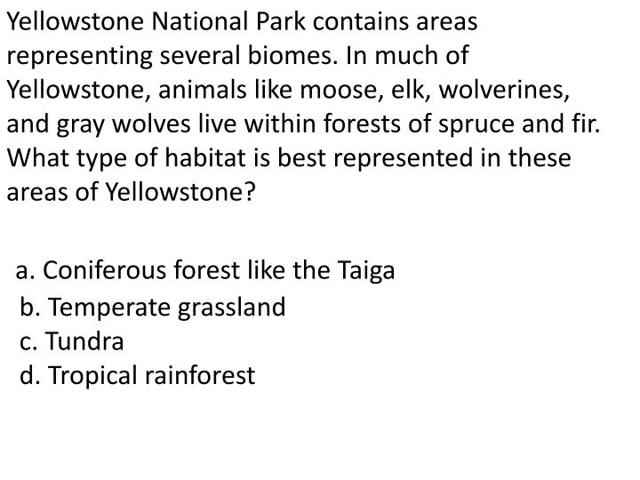 Yellowstone National Park contains areas representing several biomes. In much of Yellowstone, animals like moose, elk, wolverines, and gray wolves live within forests of spruce and fir. What type of habitat is best represented in these areas of Yellowstone