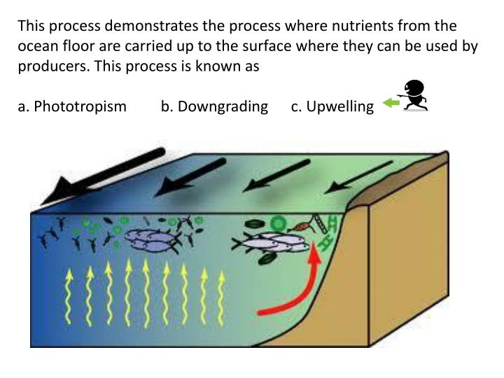 This process demonstrates the process where nutrients from the ocean floor are carried up to the surface where they can be used by producers. This process is known as