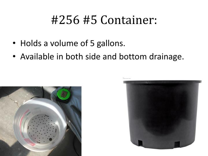 #256 #5 Container: