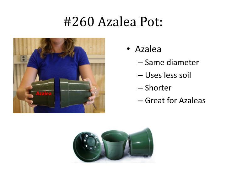 #260 Azalea Pot: