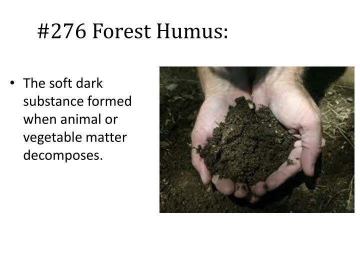 #276 Forest Humus: