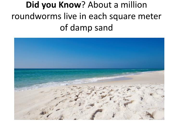 Did you know about a million roundworms live in each square meter of damp sand
