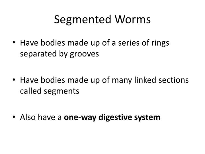 Segmented Worms