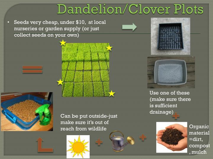 Dandelion/Clover Plots